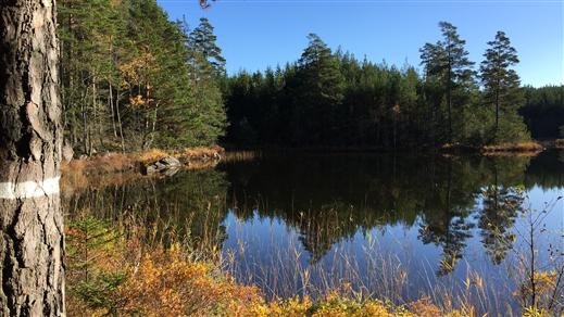 Bild för Höstvandring i Hjälmstorpenäs naturreservat, 2019-09-08, Finspång