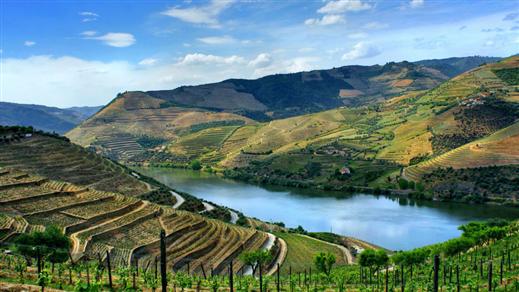 Bild för Vineri på besök - Quinta do Vallado, 2020-11-19, Wine Mechanics