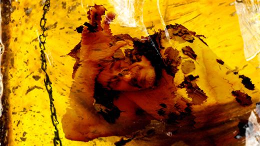Bild för Miguel Cortés - Frozen in Amber, 2021-05-07, Atalante