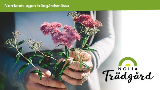 Bild för Nolia Trädgård 2020, 2020-04-24, Nolia i Umeå