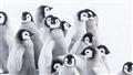 Pingvinresan 2 (Sv. tal,B-t)