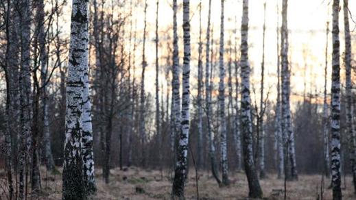 Bild för Skogsbad – medveten närvaro i naturen, 2021-05-05, Gamla Linköping