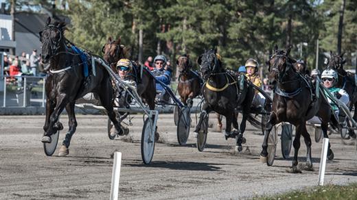 Bild för Kvällstrav, 2020-06-09, Visbytravet