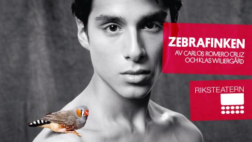 Bild för Zebrafinken, 2017-11-11, Teater Martin Mutter
