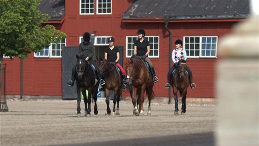 Bild för Fördjupningskurser för ridlärare, 2017-01-23, Ridskolan Strömsholm
