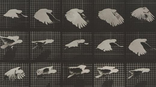 Bild för Eadweard Muybridge... + förfilm, 21 januari 16.00, 2017-01-21, Bio Victor, Filmhuset