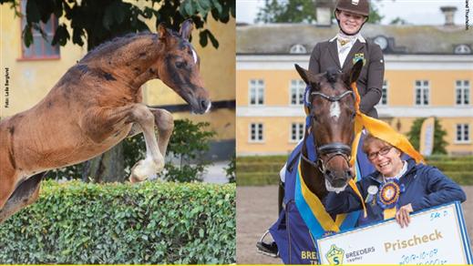 Bild för Breeders Trophy 2018, 2018-10-01, Stora Ridhuset i Flyinge