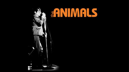Bild för The Animals, 2018-03-06, Katalin, Uppsala