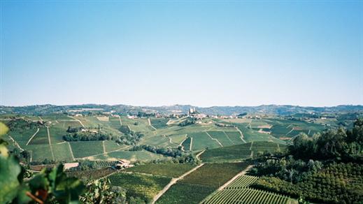 Bild för Hållkäftenlunch #21 - Piemonte med Alf Tumble, 2020-10-30, Wine Mechanics