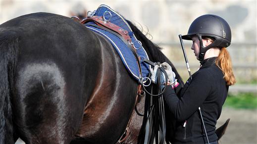 Bild för Preparandkurs, yrkesprov hästskötare - praktik, 2017-01-28, Ridskolan Strömsholm
