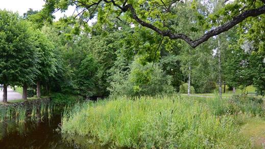 Bild för På spaning efter fladdermöss i Slottsparken, 2018-08-25, Finspång