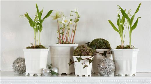 Bild för Julens blommor, 2018-12-12, Prins Eugens Waldemarsudde