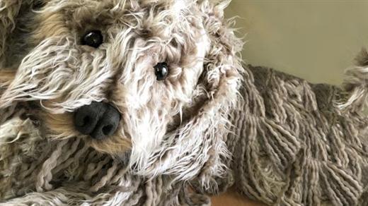 Bild för Vill ha hund, 2019-02-16, Kulturum | Black box