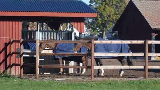 Bild för Seminarium - Lösdrift för alla hästar?, 2018-11-18, Knytpunkten