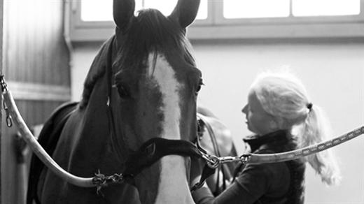 Bild för Arbetsmiljöarbete i hästverksamhet, 2019-09-26, Ridskolan Strömsholm
