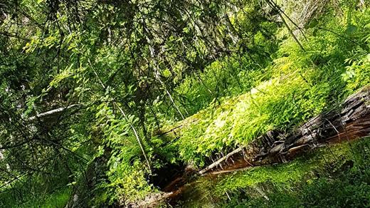 Bild för Skogsbad -Yogavandring, 2019-09-08, BLÅBERGEN Spa-Bryggeri-Event