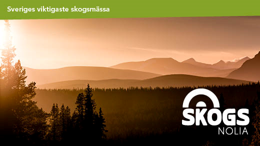 Bild för Skogsnolia, 2019-06-13, Skogsnolia